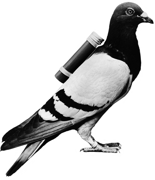 email-carrier-pigeon